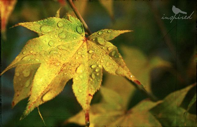 Autumn Rain #2