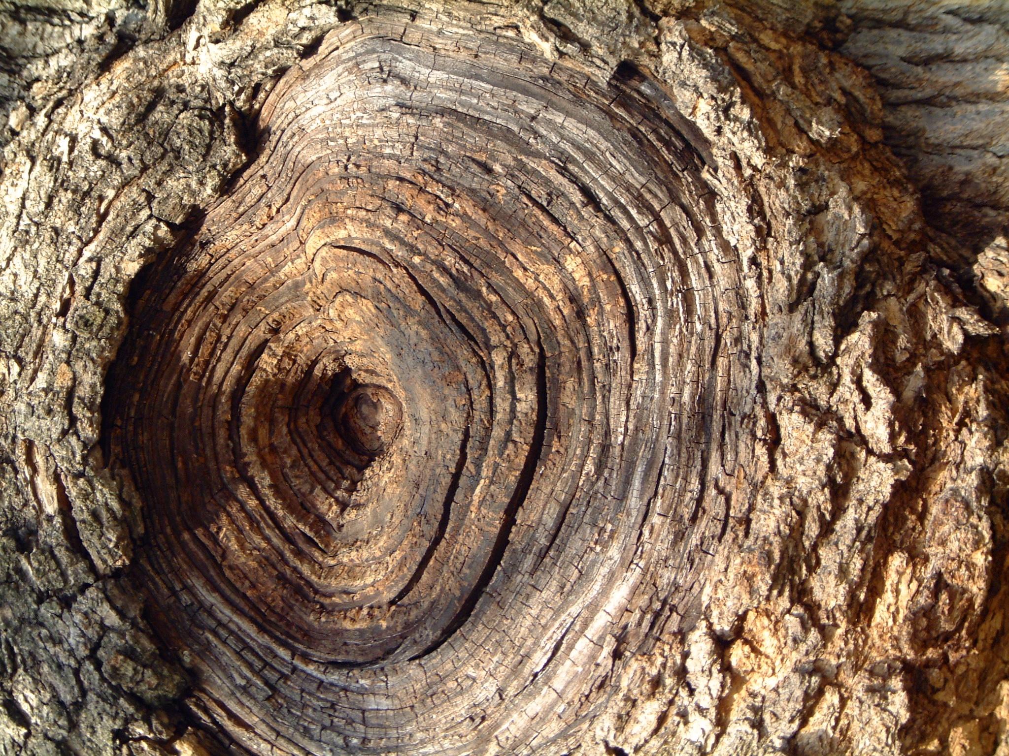 treecore.jpg