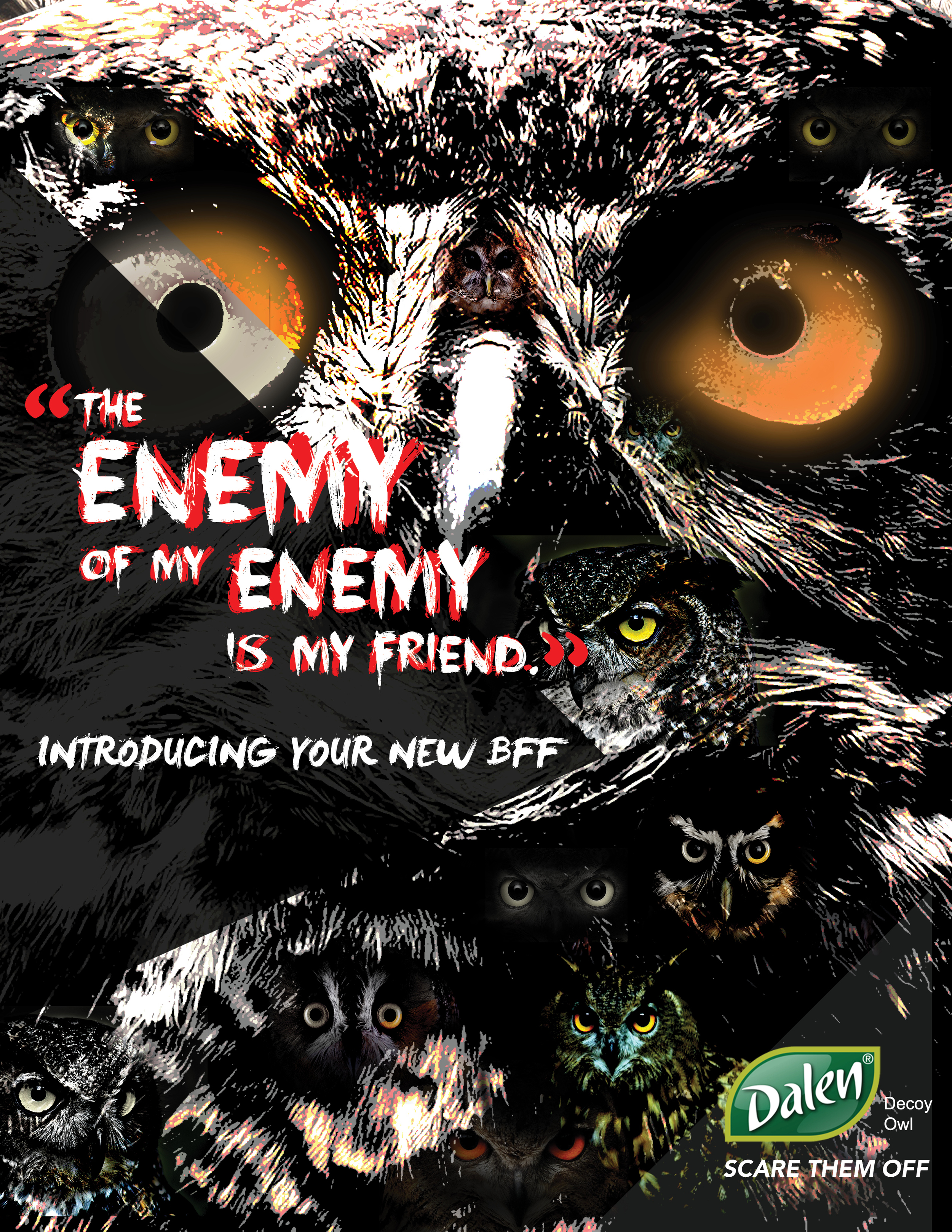 AD1-OWL.jpg
