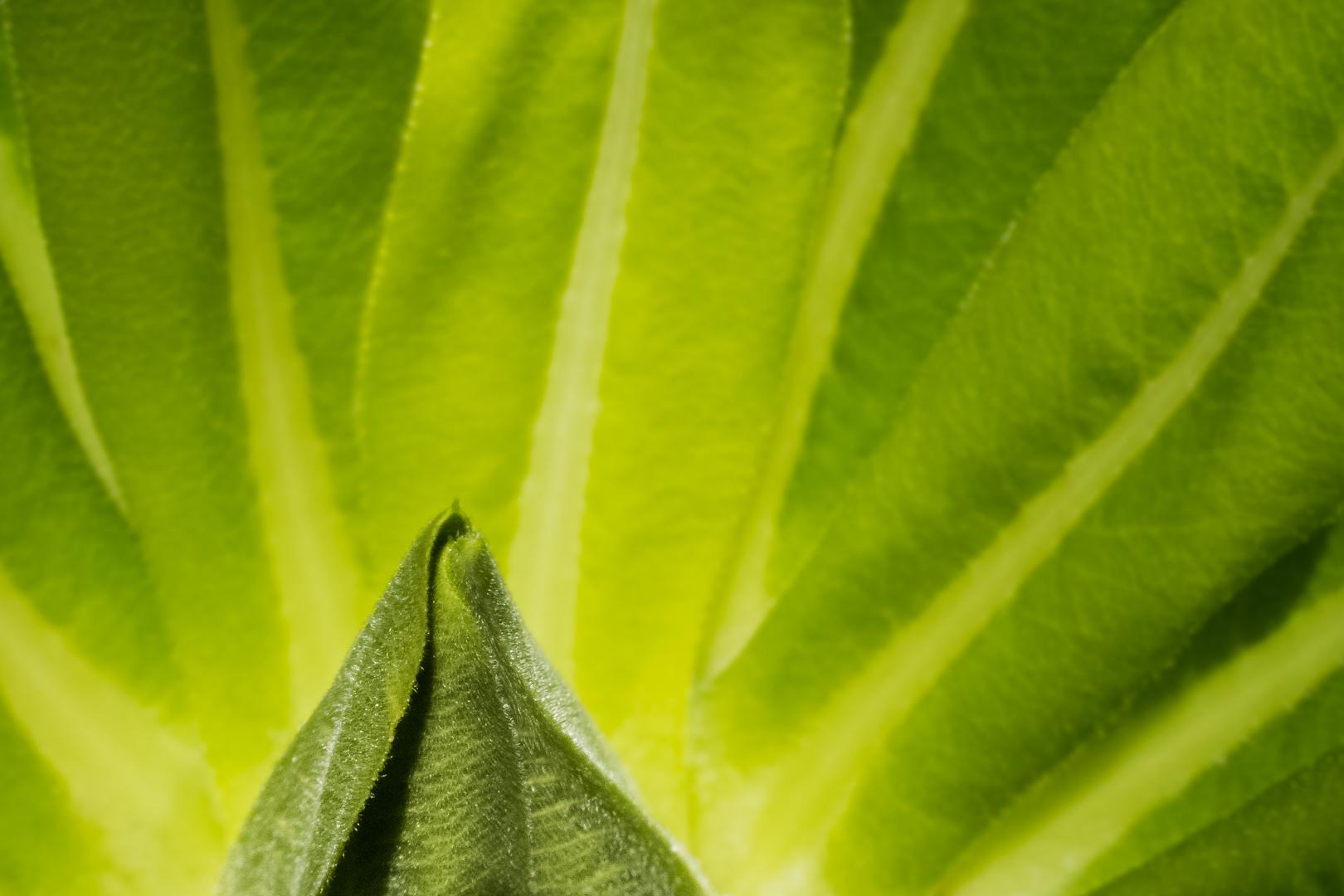 Copy of Kim Butterworth - Botanical Bloom