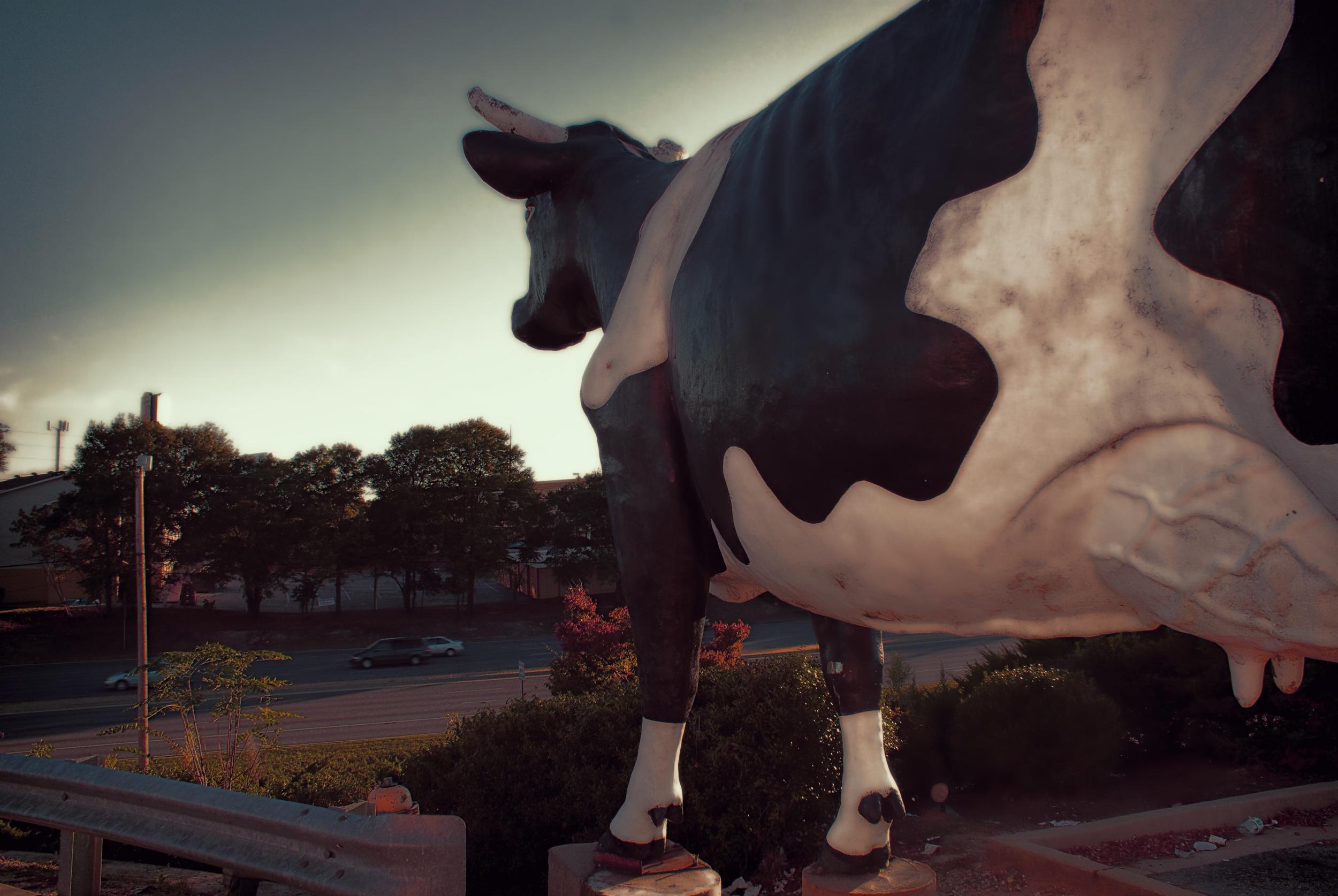 """Has anyone seen my baby?""  -Kadie The Cow"
