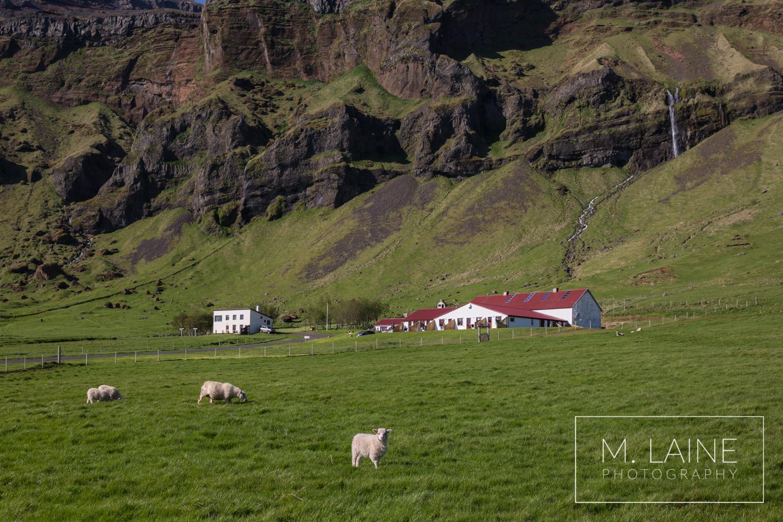Iceland-6912.jpg