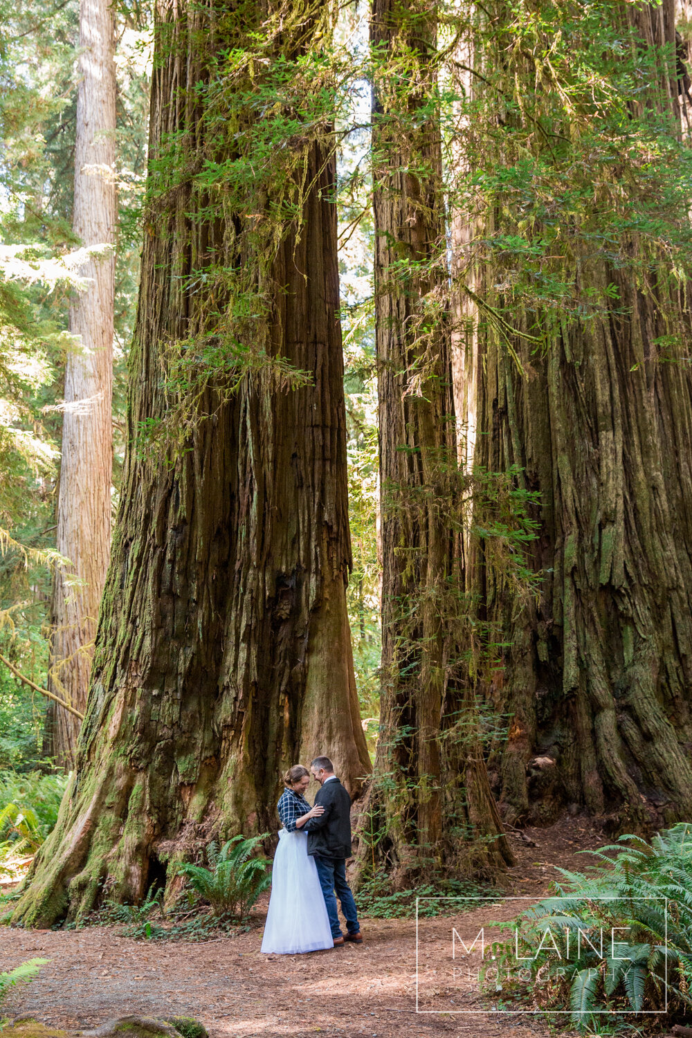 jedediah-smith-redwoods-state-park-wedding-3373.jpg