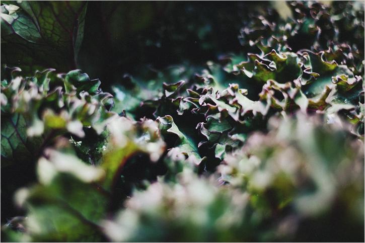 delicata_&_fennel_02.jpg