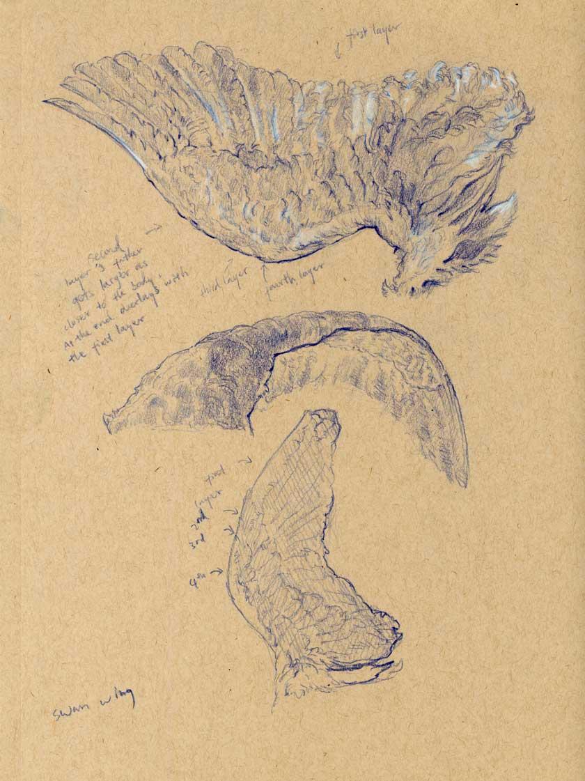 sketch-swan-wing2.jpg