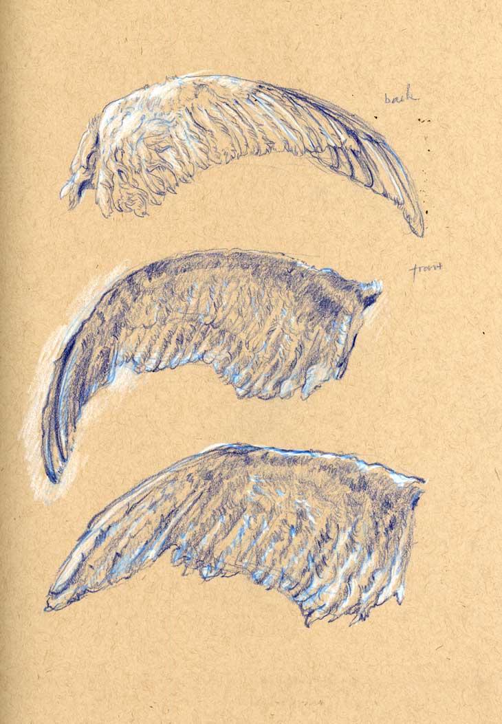 sketch-swan-wing.jpg
