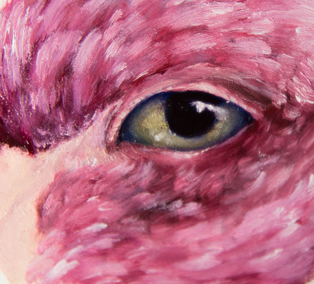 flamingo-with-human-eye.jpg