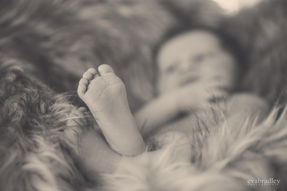 napier newborn photographers