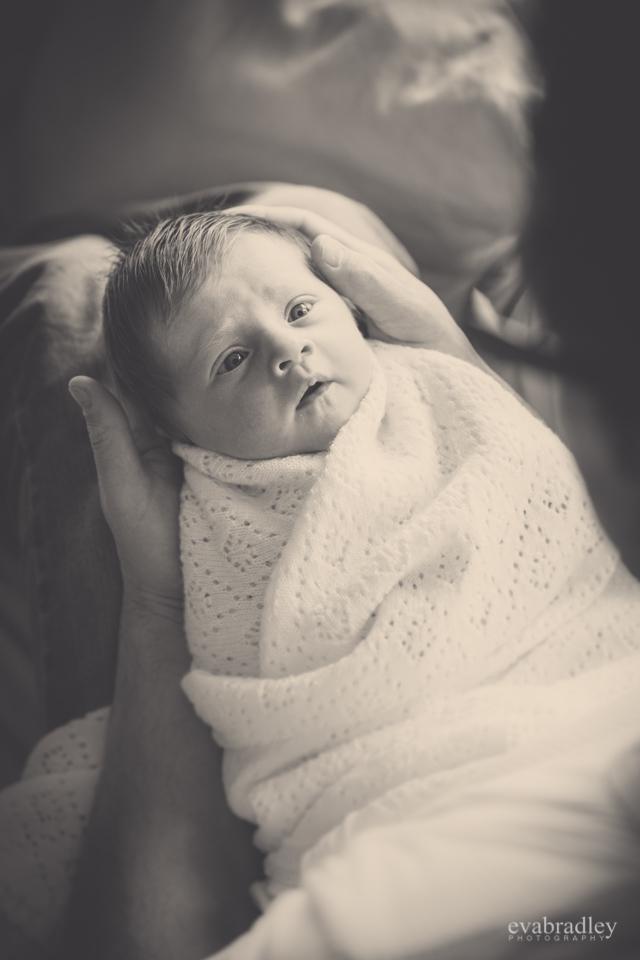hawkes bay newborn photographers
