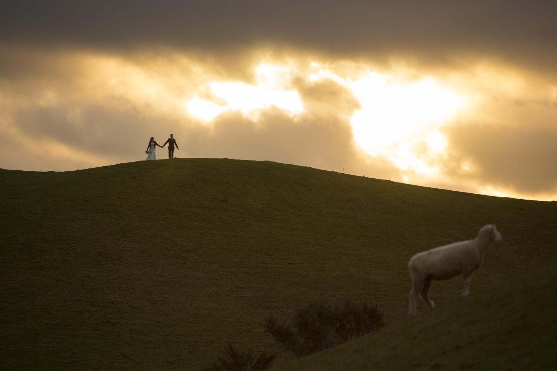 amazing farm wedding photography nz