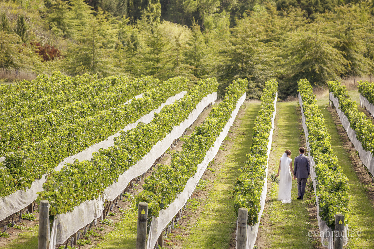 winery-weddings-hawkes-bay-nz