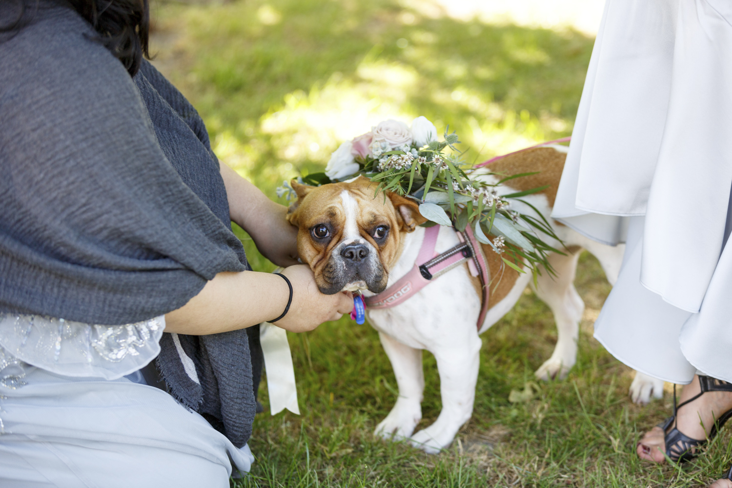 dogs-at-weddings-new-zealand