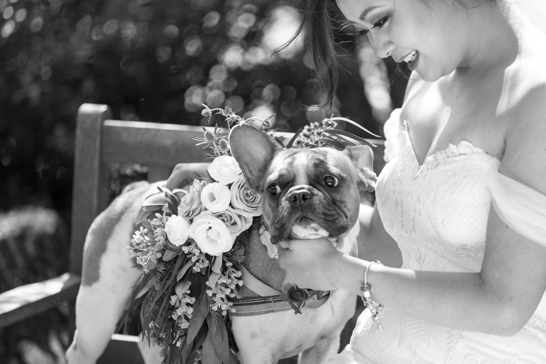 hawkes-bay-weddings-dog-collar