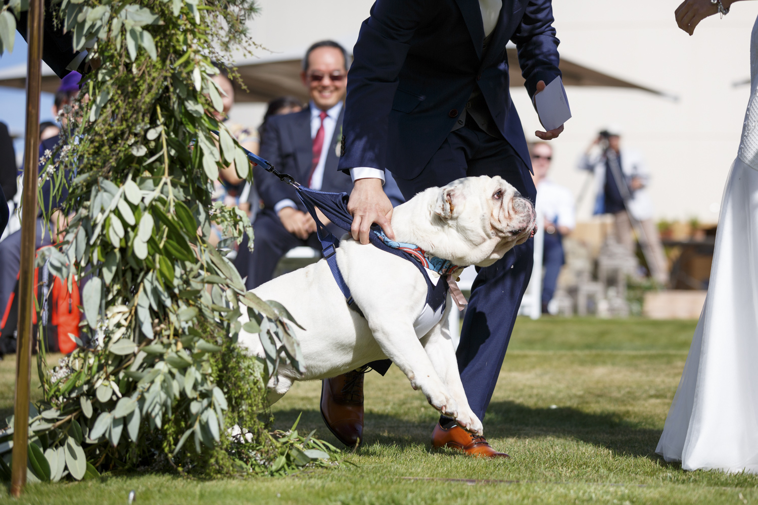 dogs-at-weddings-nz