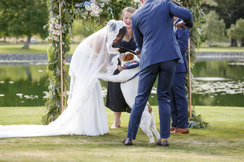 dogs-at-hawkes-bay-weddings