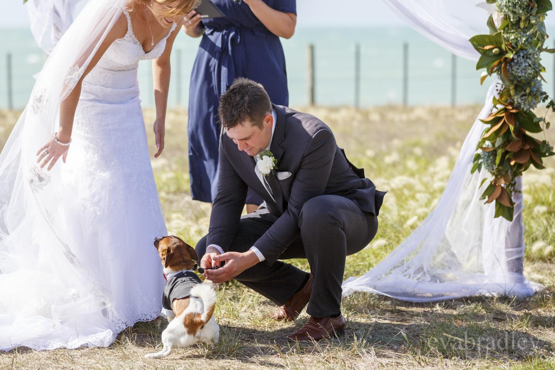 dog-ring-bearer-eva-bradley-nz