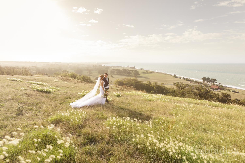 best napier wedding photographers