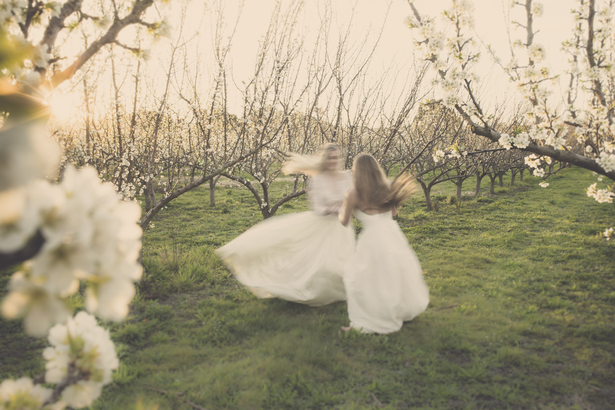 get hitched in hawkes bay napier