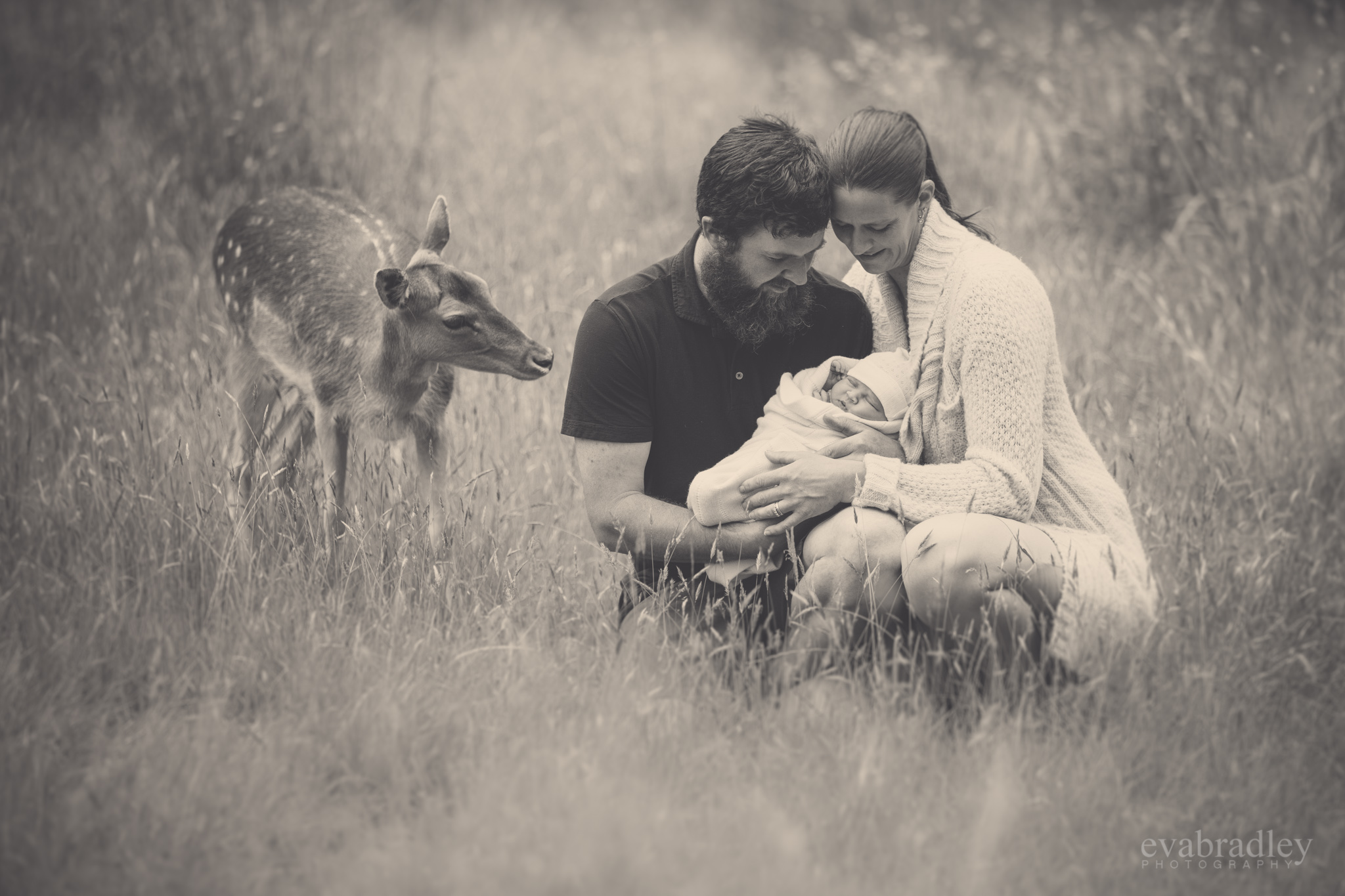 best hawke's bay newborn photographer