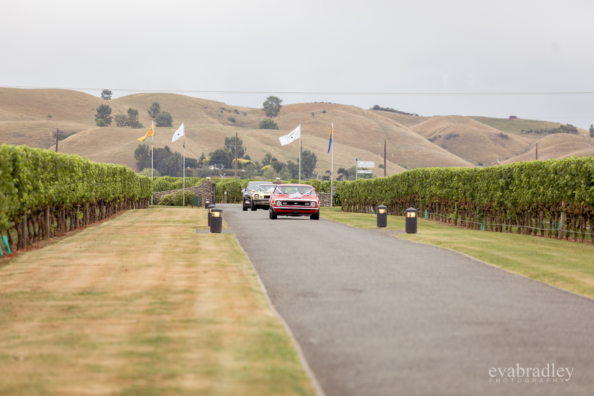sileni-estate-winery-hawkes-bay-photographer