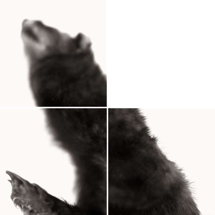 Animal insomne 2.jpg
