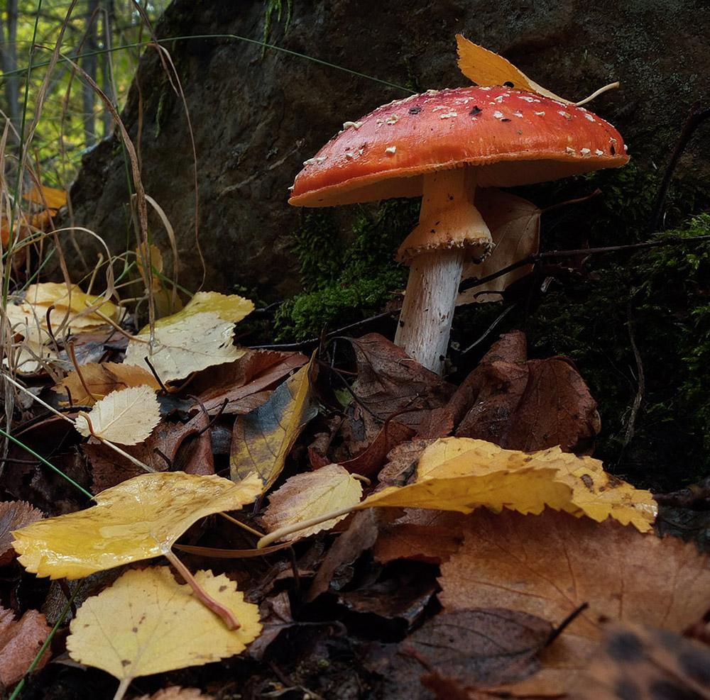 Em Montesinho, propomos a descoberta de cogumelos com acompanhamento científico e degustação em restaurante especializado (mas não o da imagem)