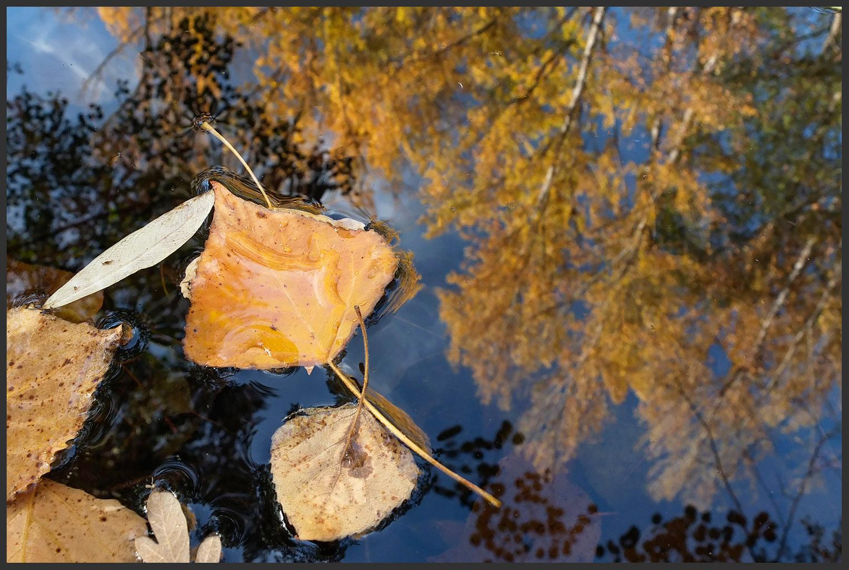 O outono também se refletiu no rio Baceiro... literalmente.