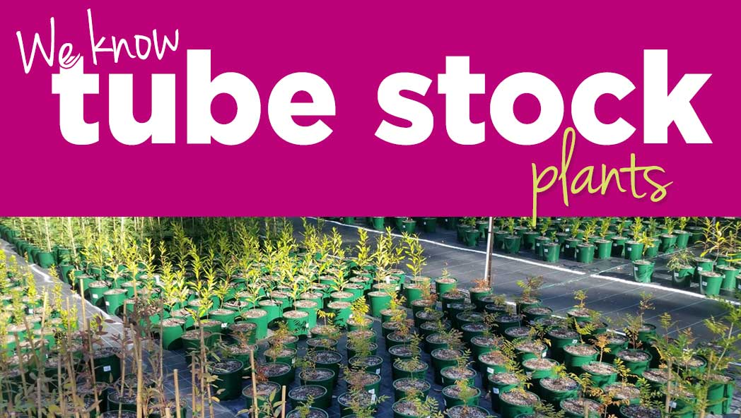 Wide range of tube stock natives available