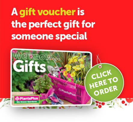 gift_voucher_promo2.jpg