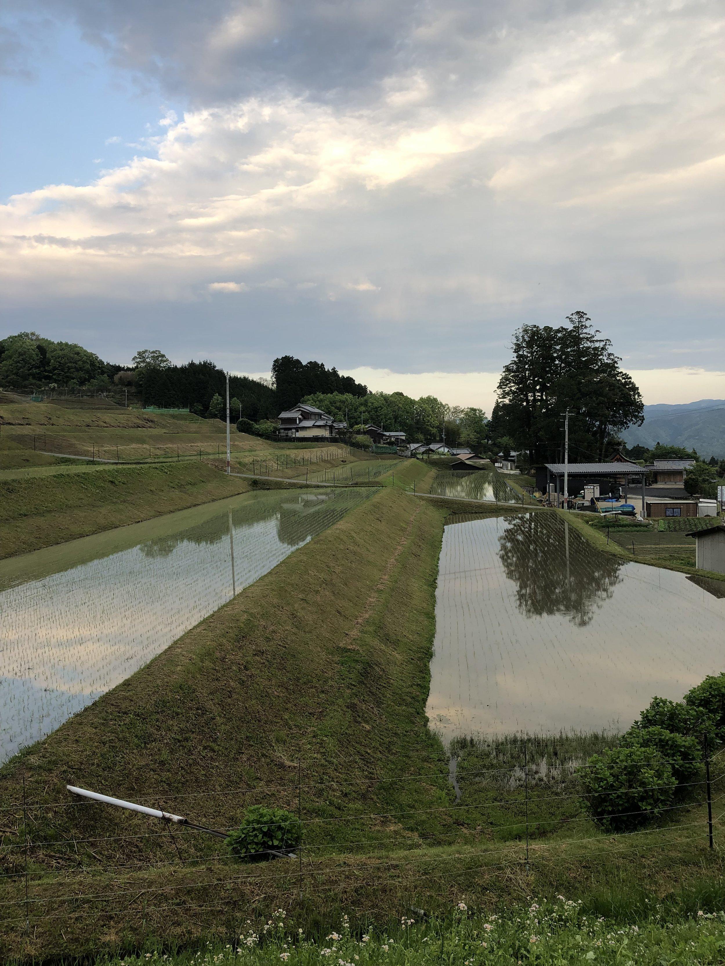 Rice paddies at dusk (Sasayuri-an)