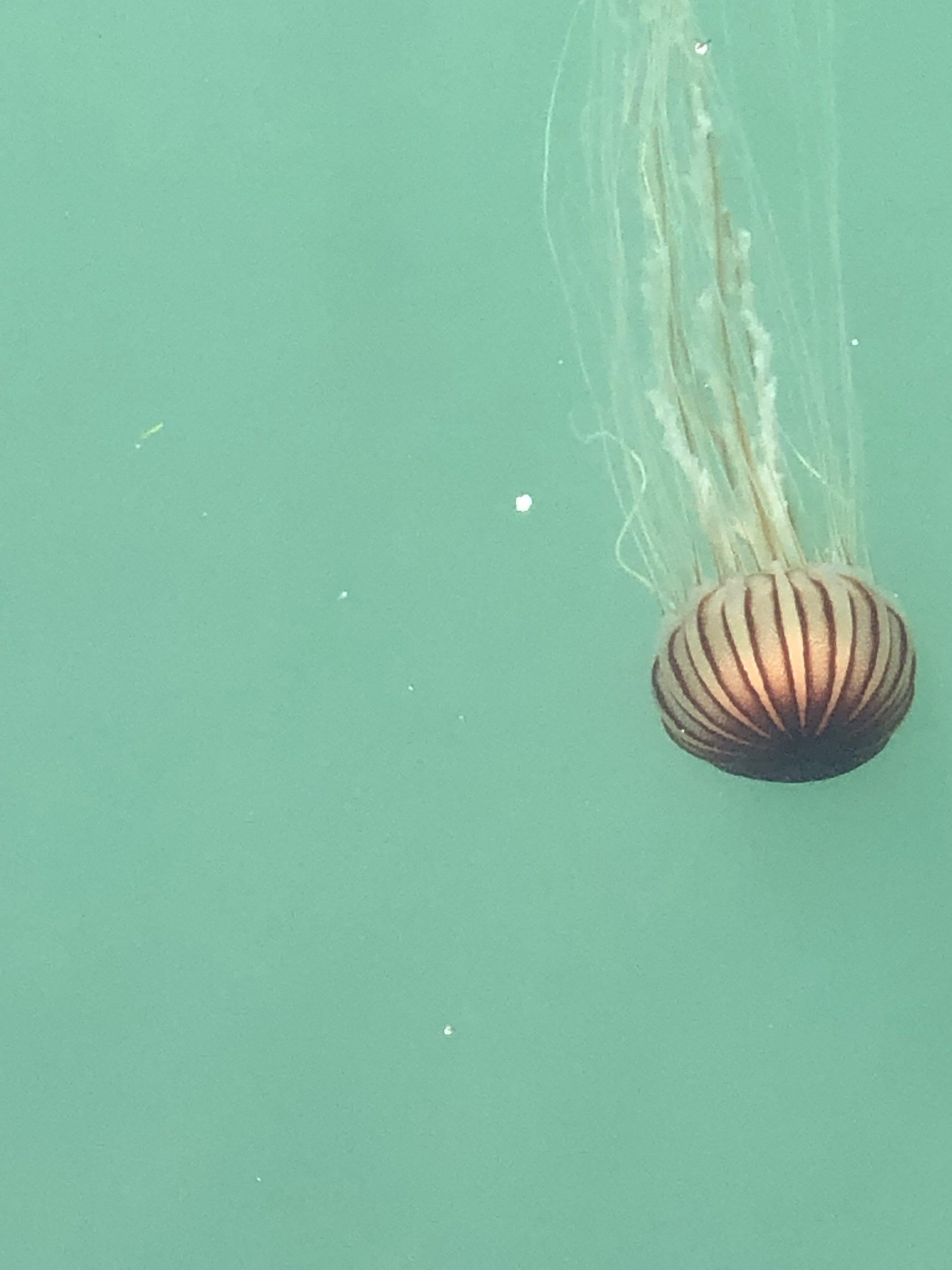 Jellyfish beside the ferry (Naoshima)