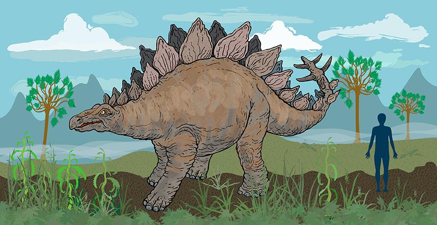 stegosaurus_flat.png