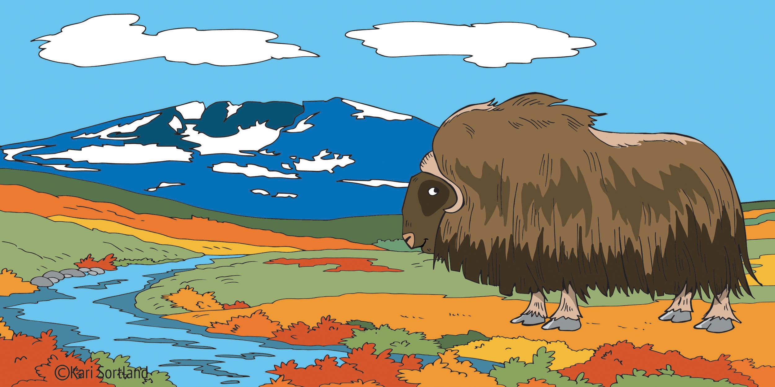 """Lydbøker for barn, """"Dyr på fjellet"""". Illustratør Kari Sortland"""