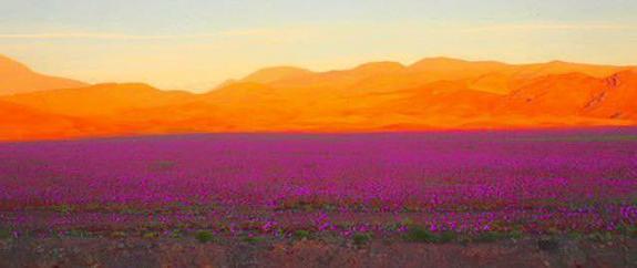 pink-and-red-atacama-blooms.jpg