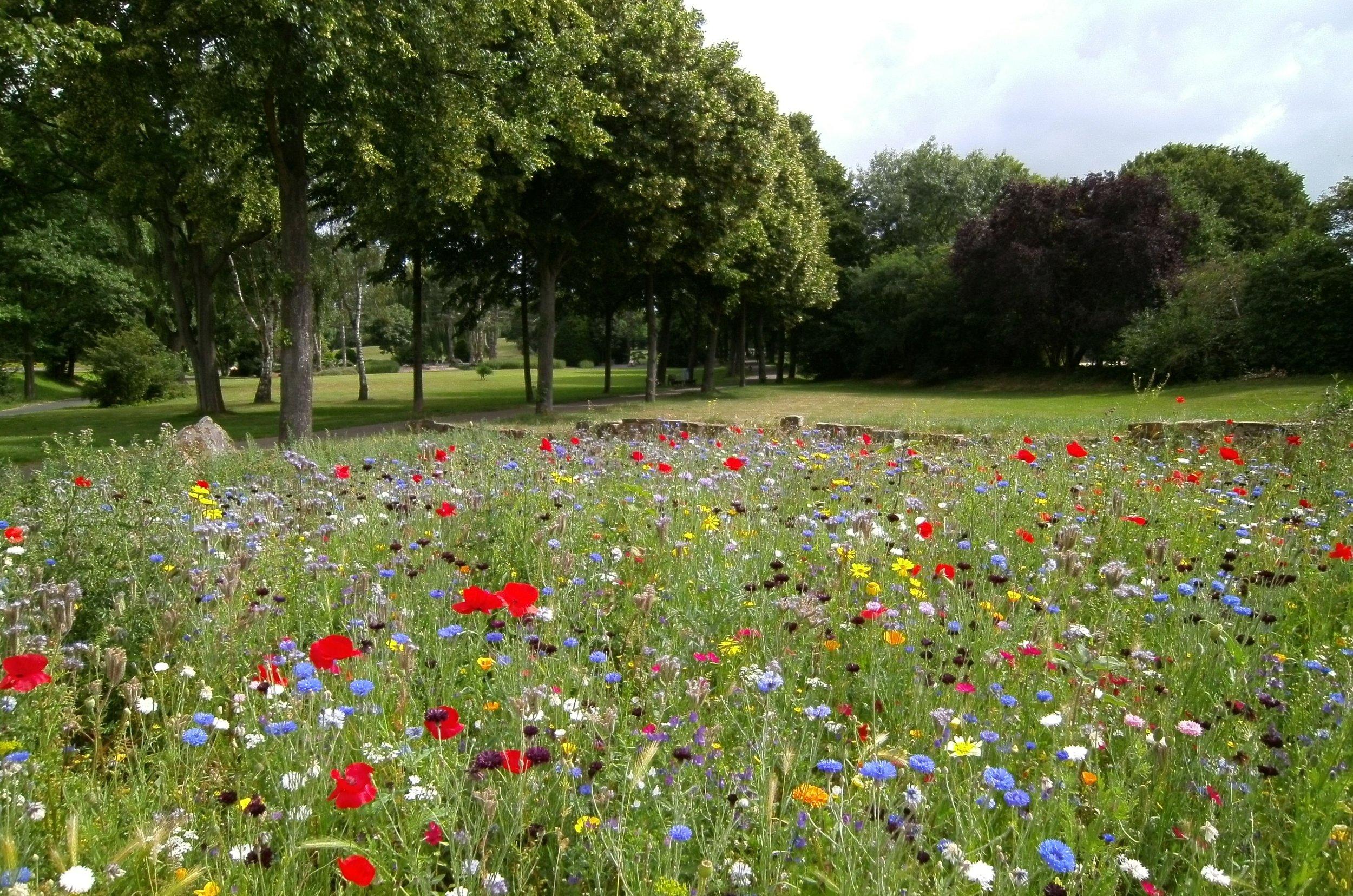 beautiful-environment-field-570041.jpg