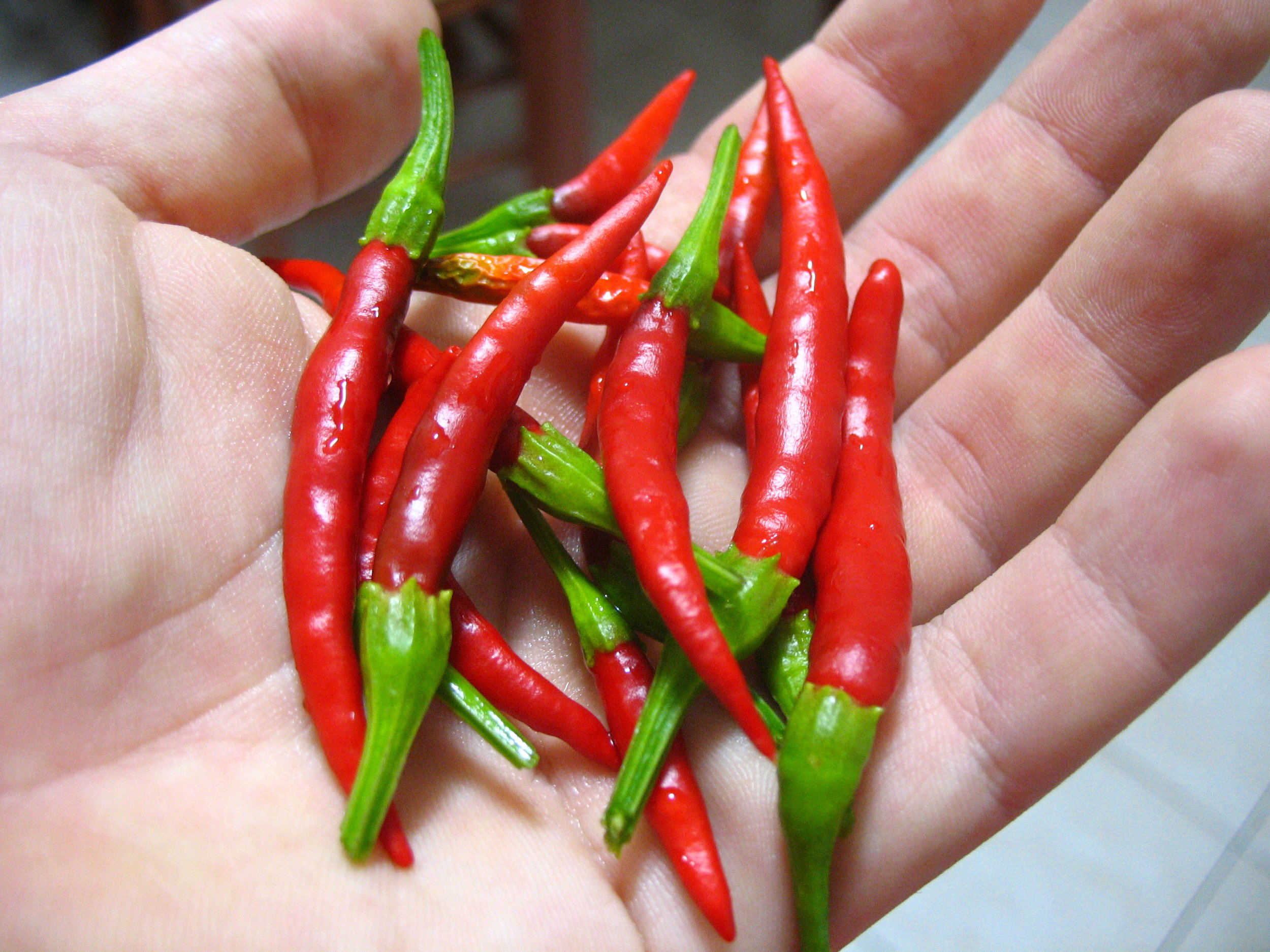 Mature_Chile_de_arbol_peppers.jpg