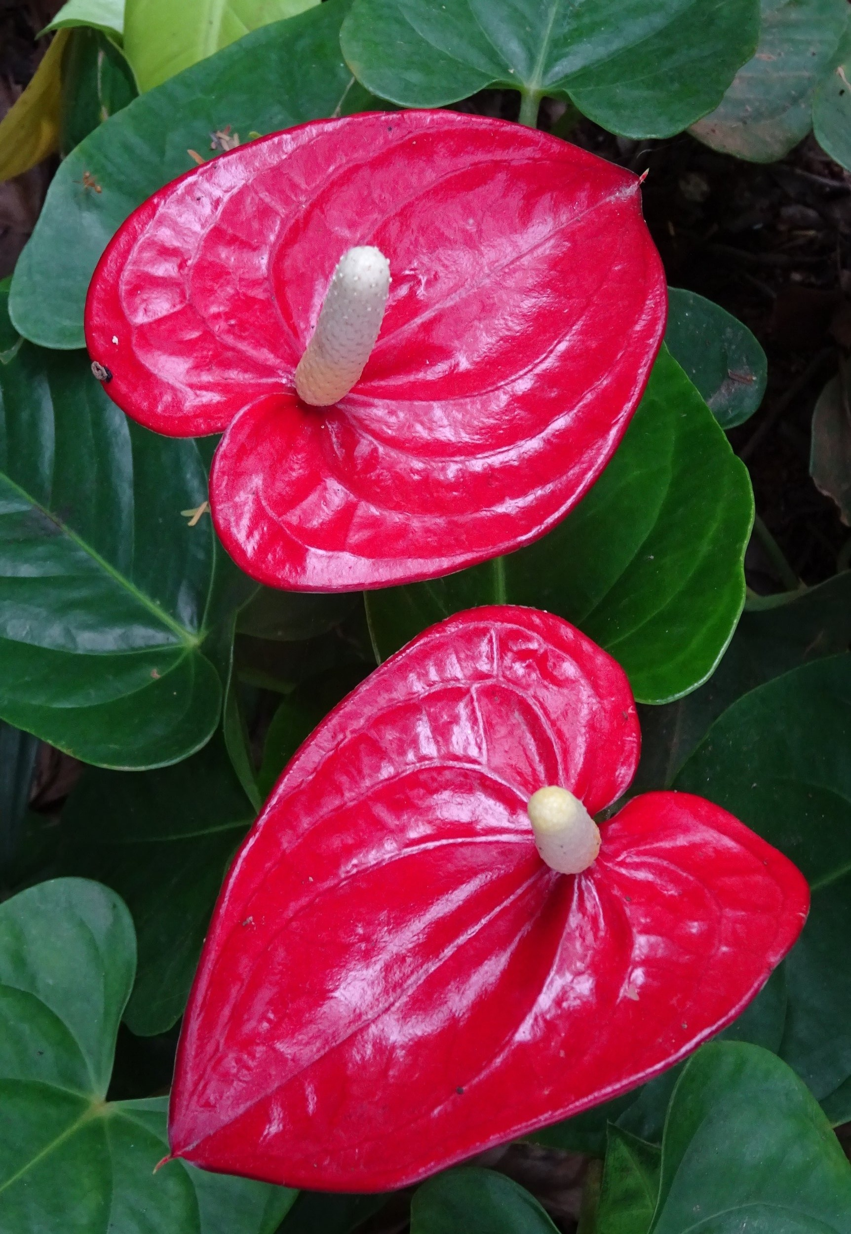 plant-flower-petal-food-red-produce-492246-pxhere.com+%281%29.jpg