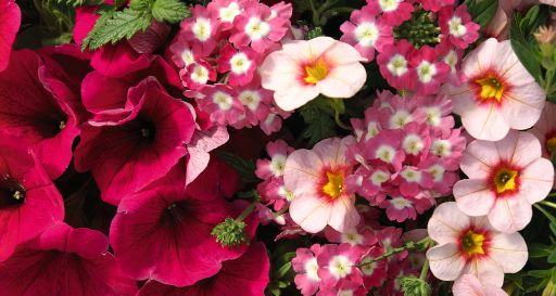 Confetti Garden Hot Pink Jazz