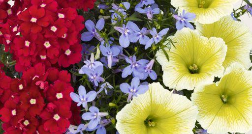 Confetti Garden Water Colors