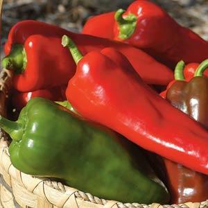 Pepper Carmen