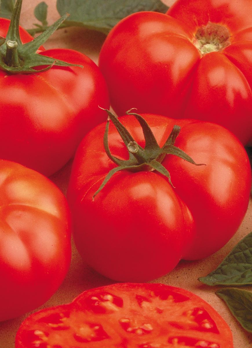 Tomato Beefmaster