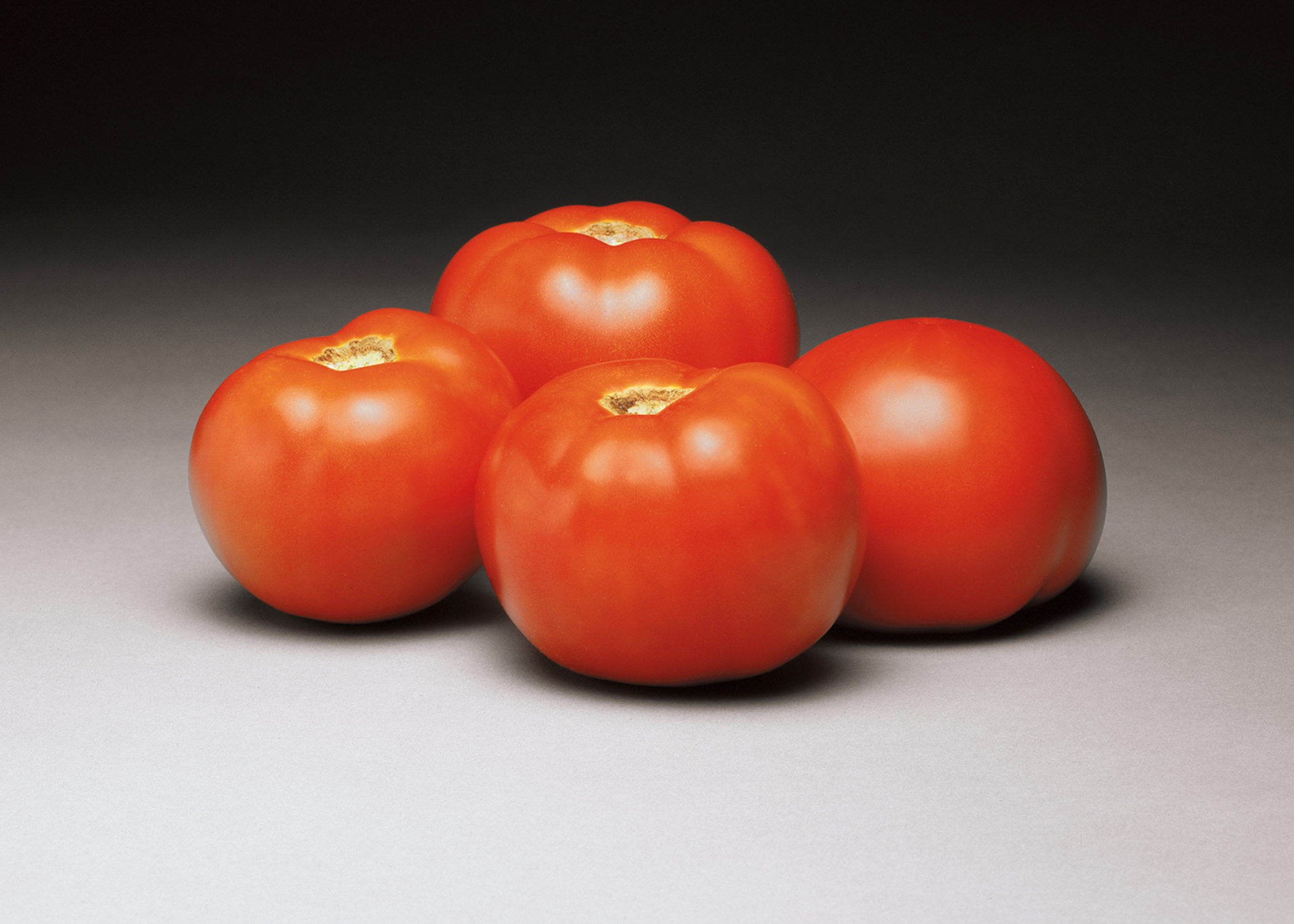Tomato Better Bush