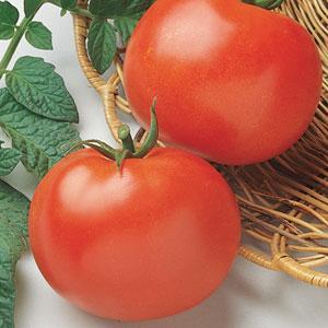 Tomato Rutgers (Non-Hybrid)