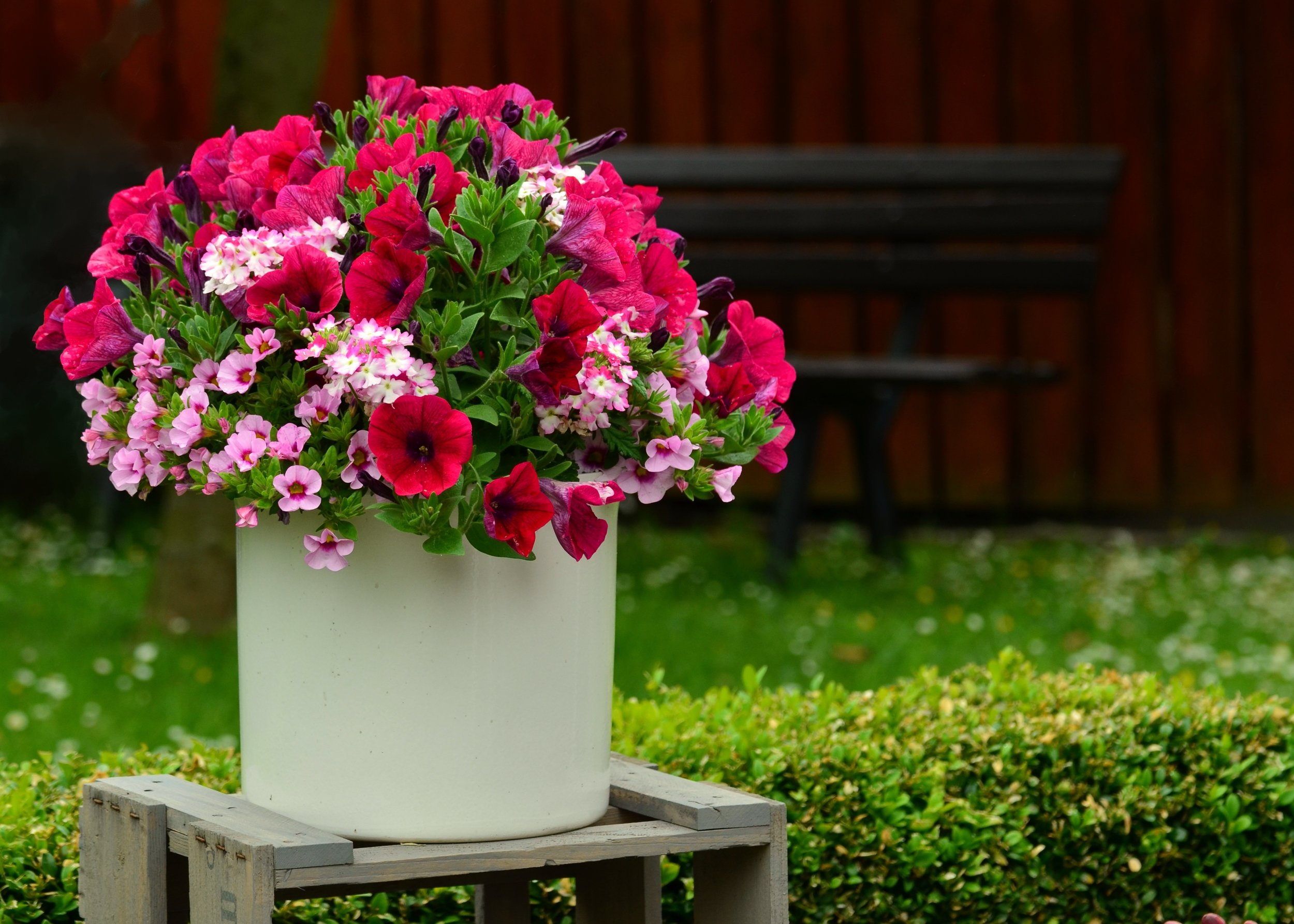 plant-lawn-flower-decoration-pink-flora-715088-pxhere.com.jpg