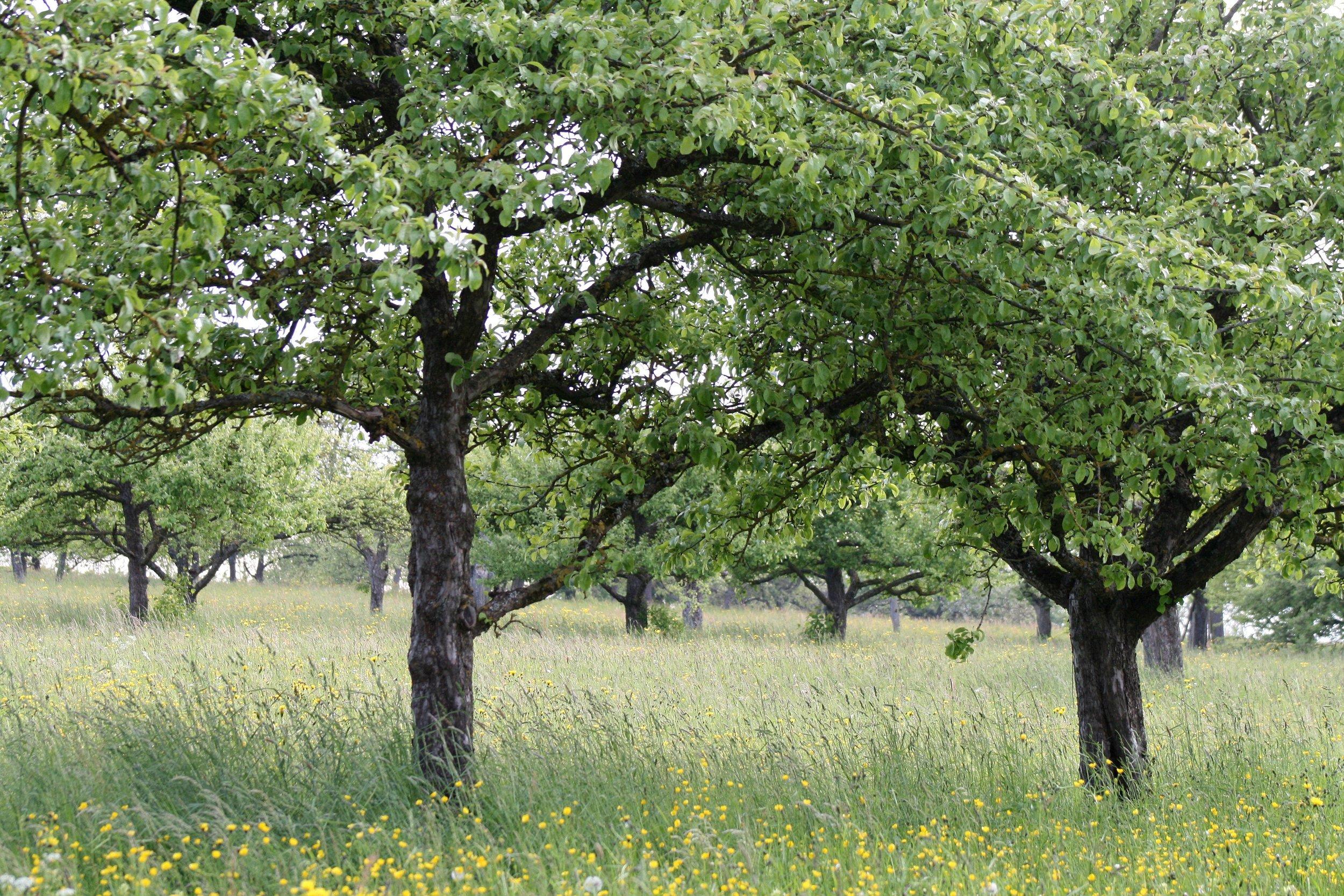 landscape-tree-nature-blossom-plant-flower-827286-pxhere.com.jpg