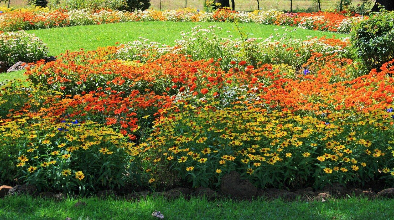 flower-garden-1399573654cJg.jpg