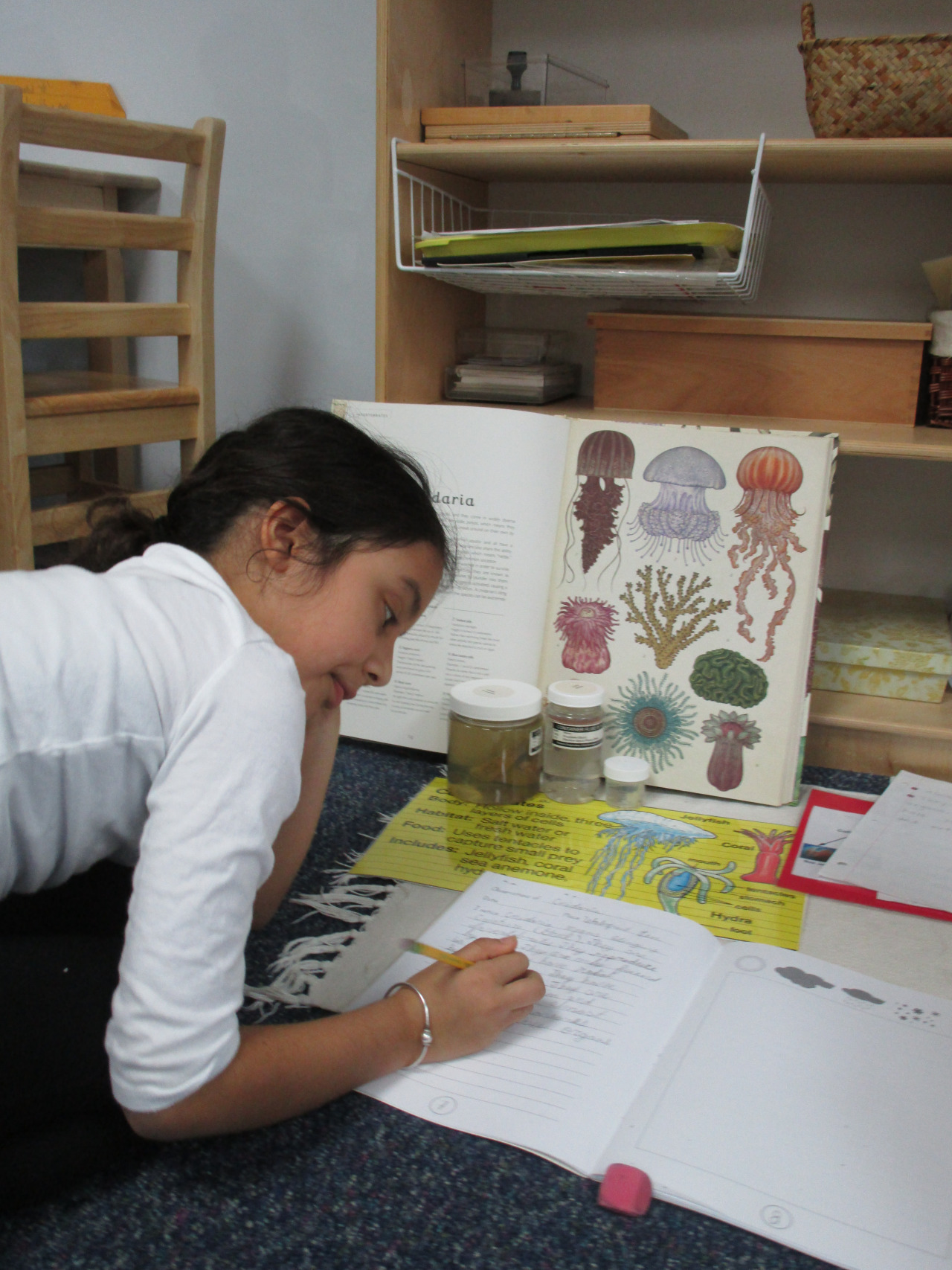 Some students in Lower Elementary North learned about different Cnidarians, a group of invertebrates that includes jellyfish, corals and sea anemones.