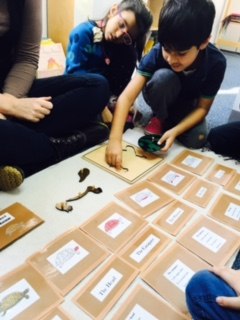 As part of their Zoology students, the first grade Lower Elementary West students learned about parts of reptiles.