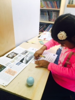 Lower Elementary West students complete a Zoology sheet along with a review discussing various facts about the animal on which they are conducting research. For the last step of the research, the students complete a project about the animal, which is usually their favorite part! A first grade student worked diligently on her animal research.