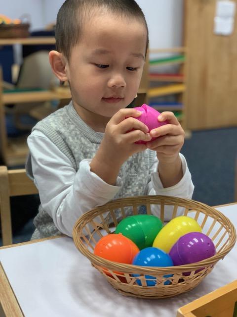 T2 eggs 1.jpg